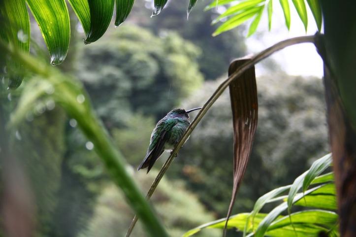 hummingbird-3621643_1280