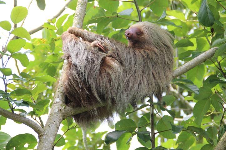 sloth-1041855_1280